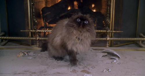 meet the parents cat jinxy beanie